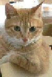 Ja3fwt_cat180306